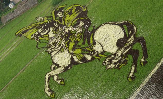 illustration dans un champde riz