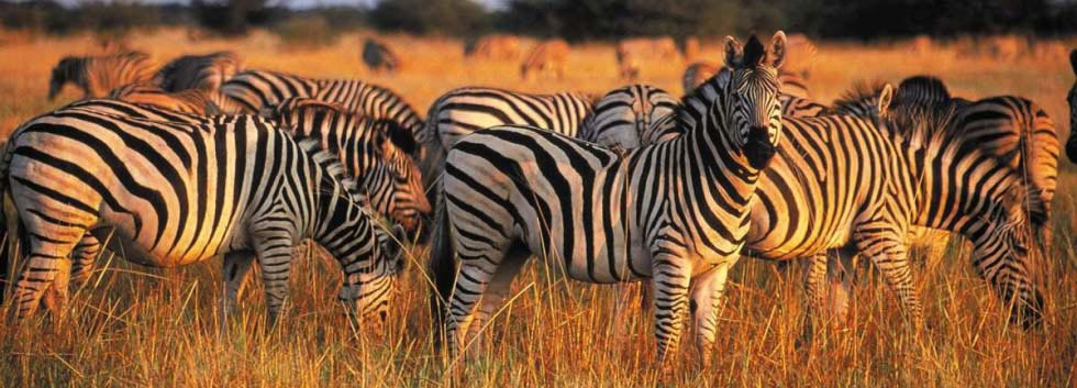 Visiter le par national Kruger