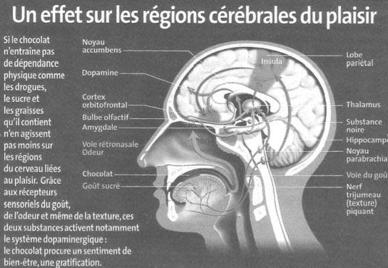 Le chocolat - effet sur la régions du plaisir ?