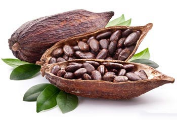 Cacao et Nutrition