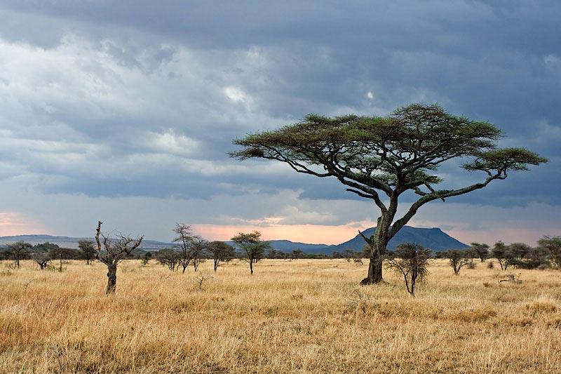 Parc Naturel de Serengeti