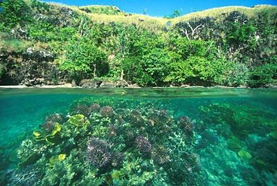Fond marin de la Papouasie