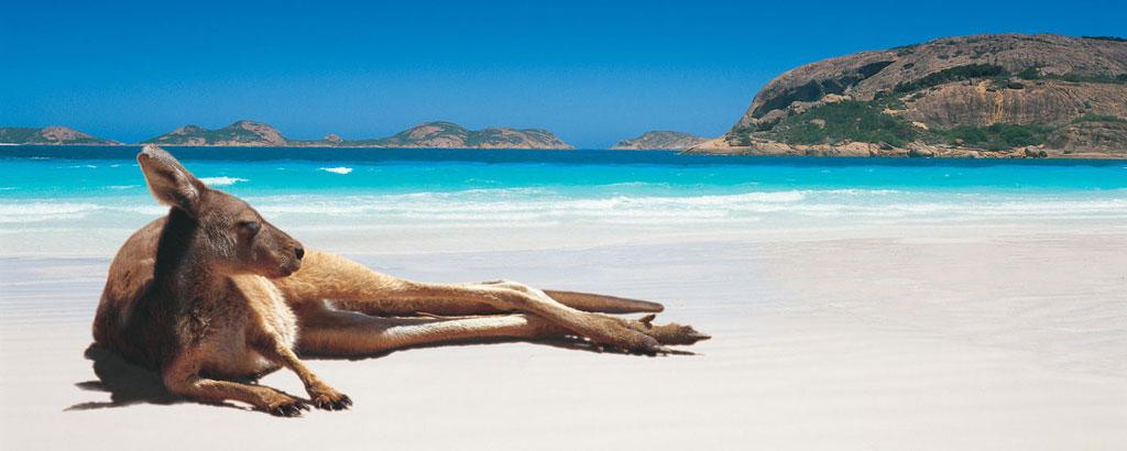 Un Kangourou sur une plage en Australie