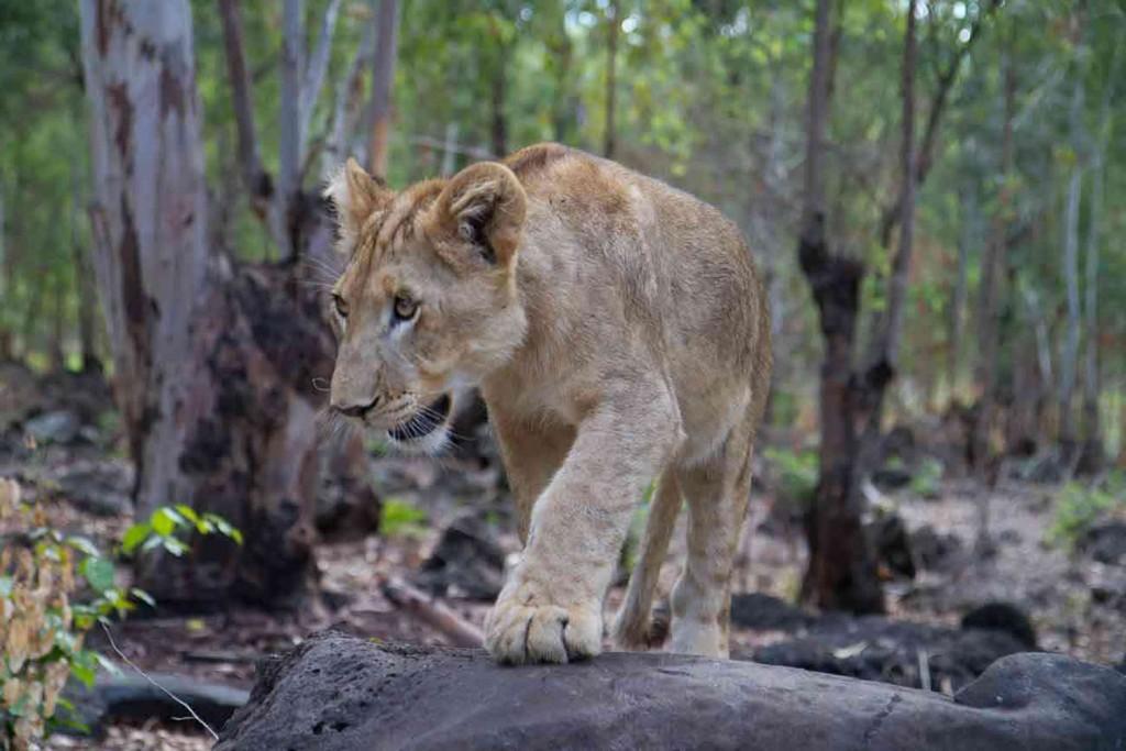 Savanne - Sud Ile Maurice