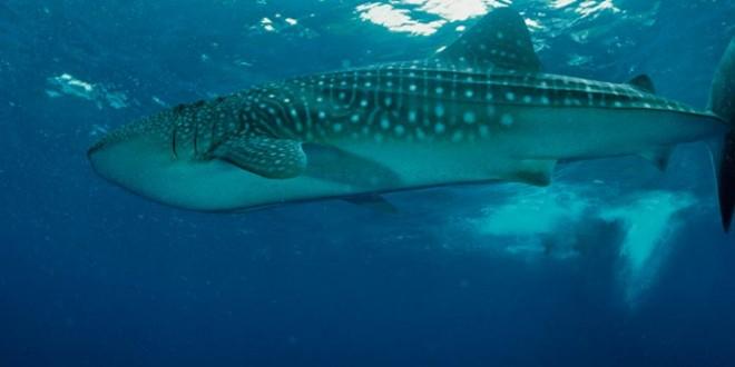 Seychelles - Plongée