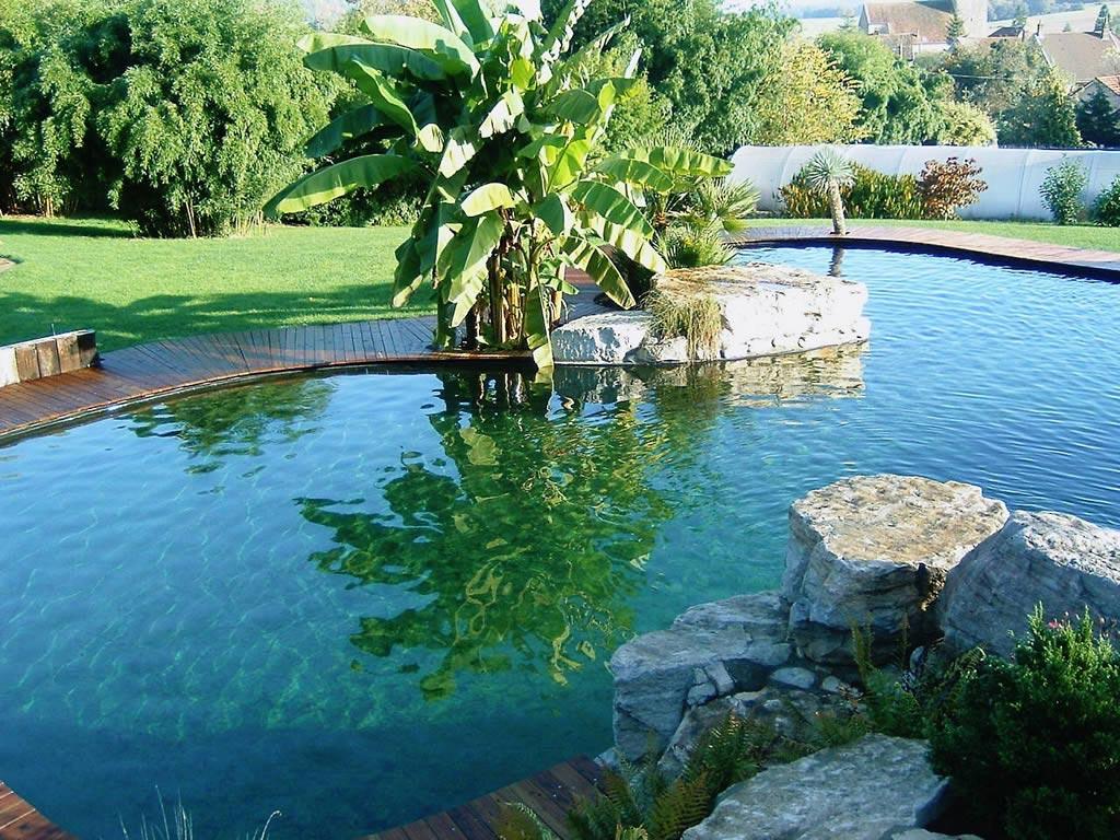 piscine jardin naturelle