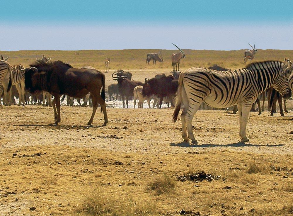 Namibie tourisme - Parc Etosha