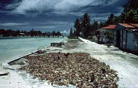 Coprah Polynésie