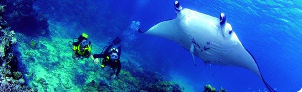 Plongée en Polynésie
