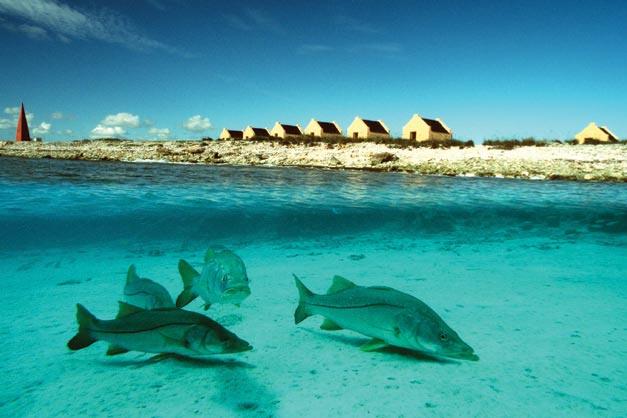 Bonaire - Paysage