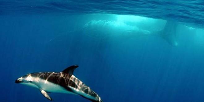 Plongée sous-marine aux Antilles