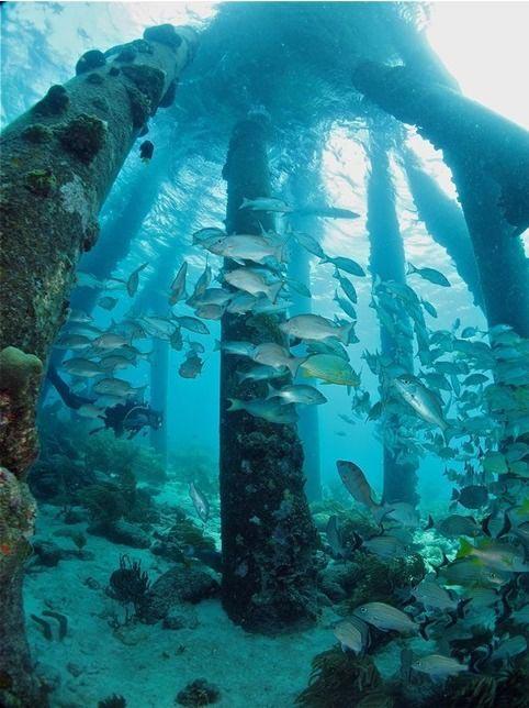 Plongée dans les Caraïbes