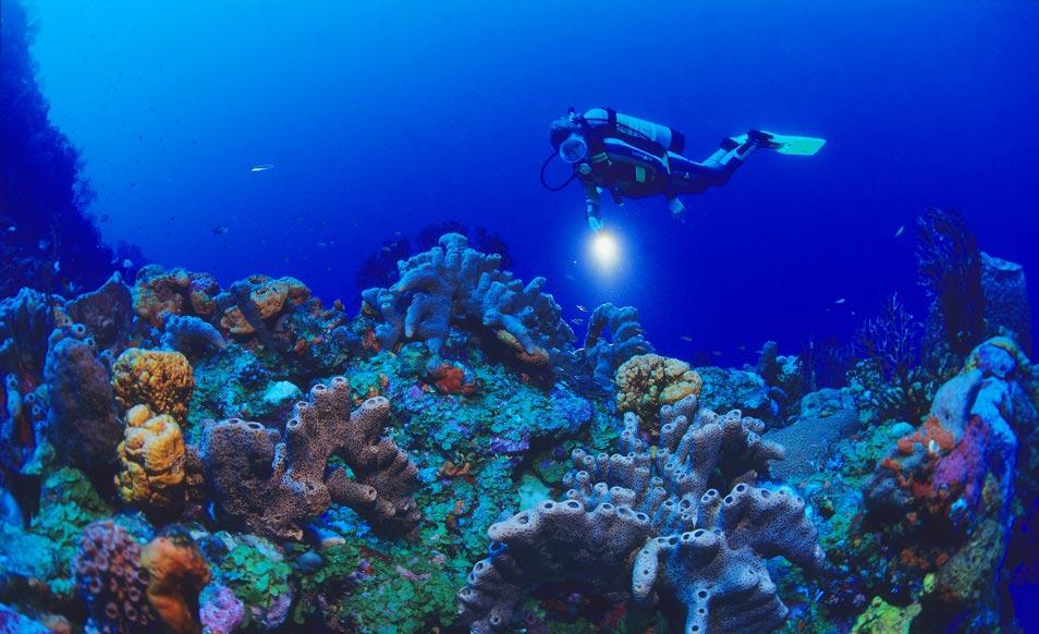 Voyage aux Antilles - Plongée