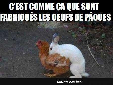 Image drole d'Animaux