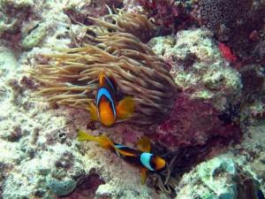 Plongée en Mer-Rouge