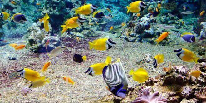 Poisson en Polynésie