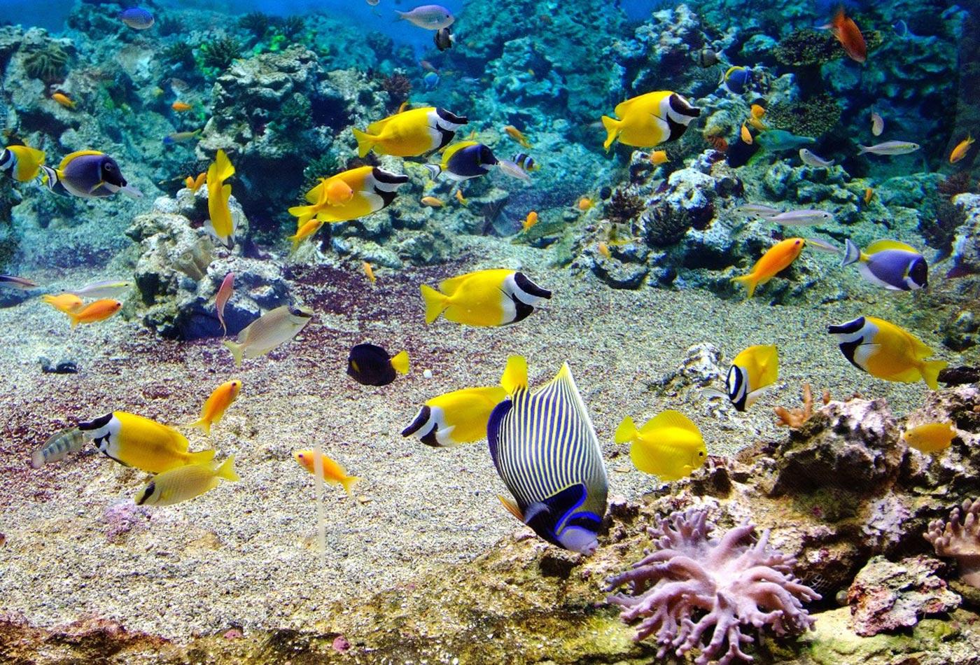 Les poissons de polyn sie arts et voyages for Art et cuisine tahiti