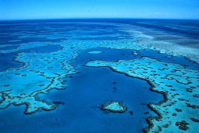 Le corail de la Grande Barrière