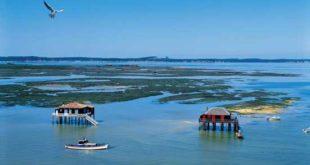 Bassin d'Arcachon - Ile aux oiseaux