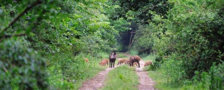Forêt de France